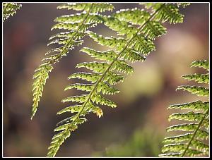 Some shots I took recently-fern.jpg