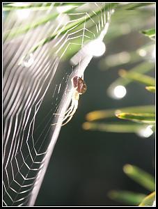 Some shots I took recently-spider.jpg