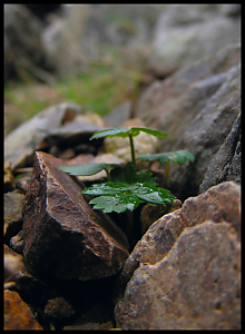Some shots I took recently-rock_plant.png