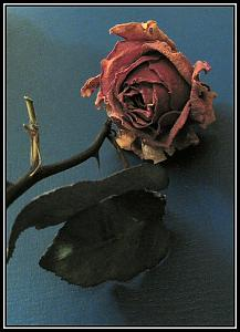 Canon Powershot A75-old-rose.jpg