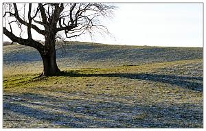We had frost last week-coldtree.jpg