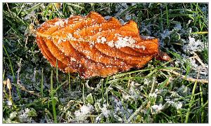 We had frost last week-frostyleaf2.jpg