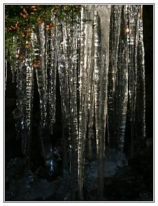 We had frost last week-icicle.jpg