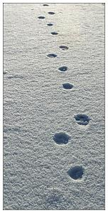 We had frost last week-snowpaw.jpg