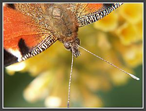 Some random piccies-butterfly1.jpg