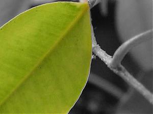 Some random piccies-plantresize0.jpg