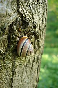 While I was out today...-snail1.jpg