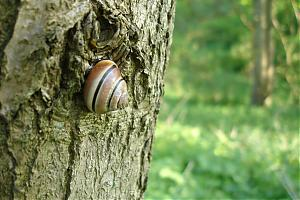 While I was out today...-snail3.jpg