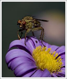 It's a small world-flymacro1.jpg