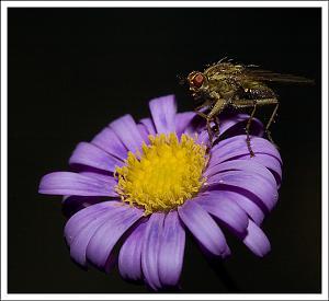It's a small world-flymacro2.jpg