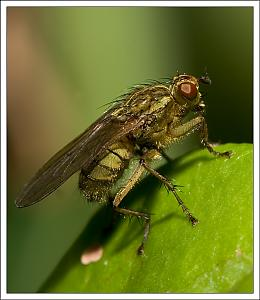 It's a small world-flymacro4.jpg