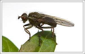 It's a small world-flymacro5.jpg