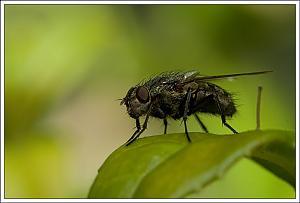 Still a small world-plainfly.jpg