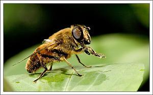 Still a small world-bee3.jpg