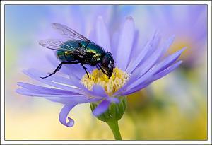 Still a small world-flymacro10.jpg