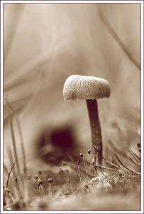 Havent posted a photo in a while-funghi2.jpg