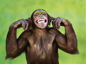 Picture fight.-cheeky-monkey.jpg