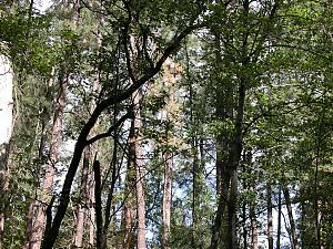 Took a trip-shadedtrees.jpg