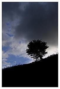 Tree photo using tone compression-tree_hill_border.jpg