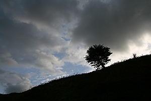 Tree photo using tone compression-img_4663.jpg
