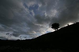 Tree photo using tone compression-tree1.jpg