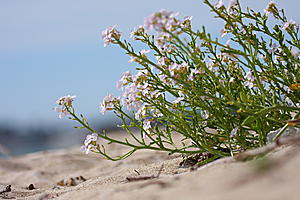 Beach photos-plant.jpg