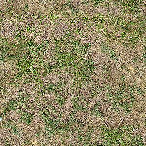 Camoflage seamless texture maps - free to use-grass_dried_3000.jpg