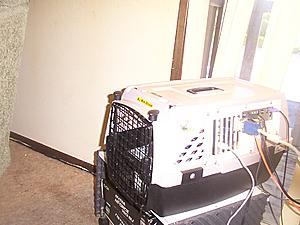 Cat Carrier ll has begun!-petcarrirr-ll-024.jpg