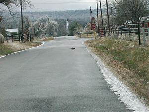 Ice storm-100_0305.jpg