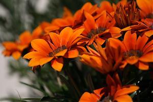 Canon EF 70-200mm f/4 L USM lens sample photos-flowers.jpg
